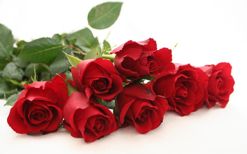 Ruže-8.mart